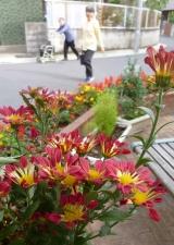 花の通り道
