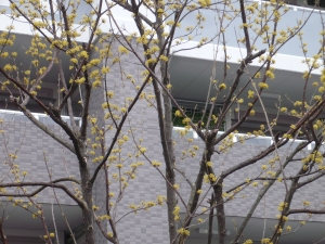 珍しいこの樹木の花