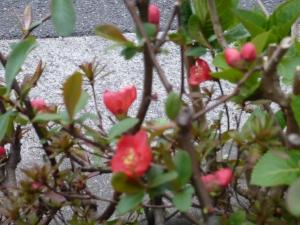 えっ?この紅色の花は?