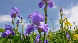 「花の道」楽し