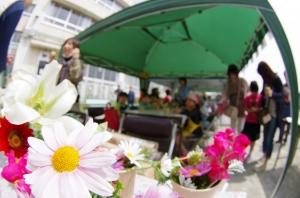 松南の森の花壇