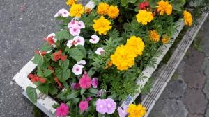 目につく花
