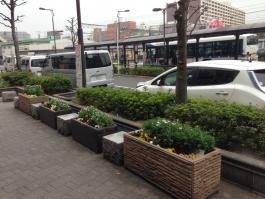 金町駅南口駅前の花壇です