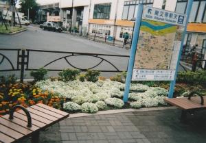 新柴又駅北口広場花壇