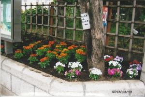 上小松小学校正門左側花壇