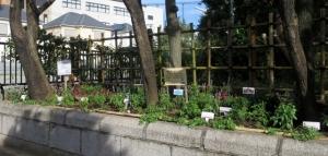 花壇コンクール調査の日