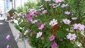 あふれる花