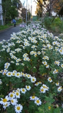 「菊」の庭