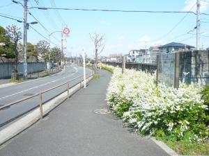 水元公園までの道標