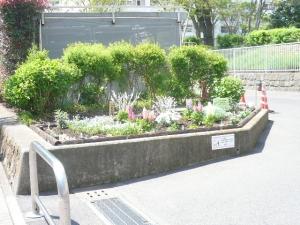 綺麗な花壇