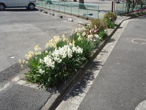 鎌倉4丁目緑道植樹帯花壇