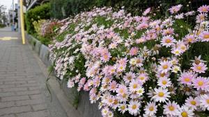 寄り道と花見