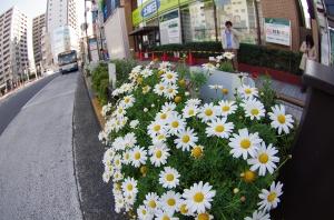 あきないの花こみちの花壇
