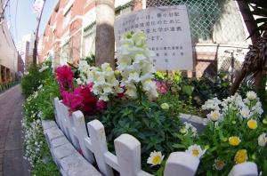 東京聖栄大学の花壇