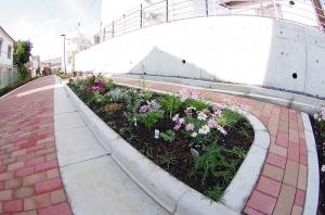 中町緑道の花壇