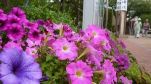 花のある往来