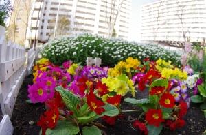 西新小岩リバーハイツの花壇