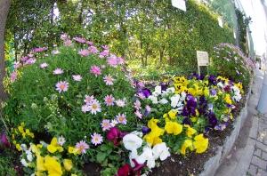 上平井中学校の花壇