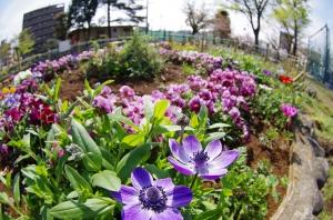 渋江公園の花壇