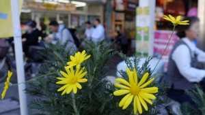 花は街の顔