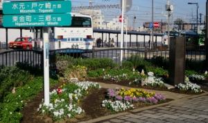 金町駅南口の花壇