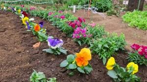 花植え途中