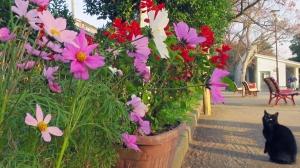 お花見できます。