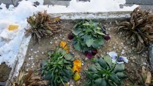 東金町3丁目の花 その1