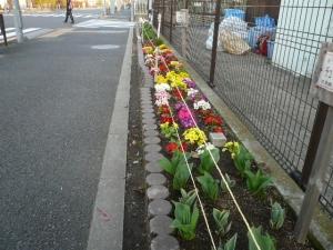 色とりどりの花が咲いています。