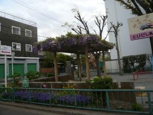 藤の花が咲いていました。