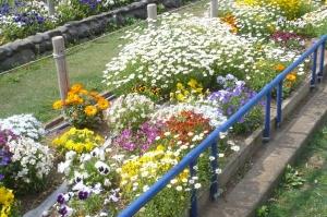 春爛漫の公園花壇(2)