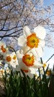 春のプレゼント4