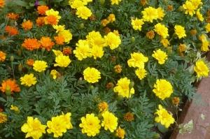 黄金の花道