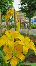 見ている花、見てほしい花。