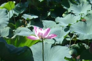 今夏の水元公園の自然を散歩する4