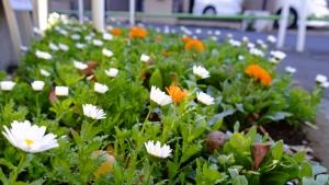 春への2色