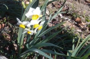春の光を一身に受けて