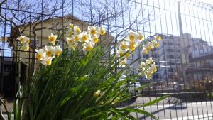 嬉しい開花