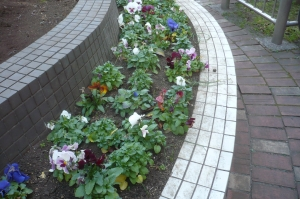 消費生活センター前の花壇