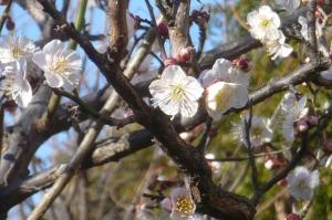 冬の青空に春の様子