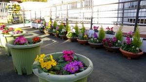 増えた花鉢