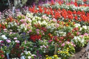 いきいき花壇
