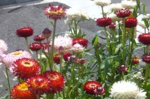 珍しい花です!