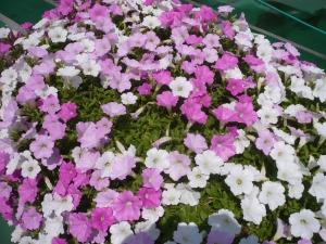区役所の緑と花のいこいガーデン