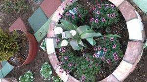 新しい花壇が出来ました♫