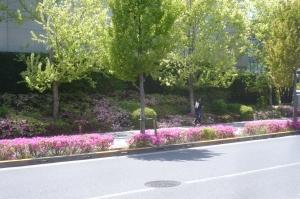 新宿みらい公園周辺の5月