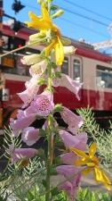 駅前にはいつも花がある。
