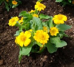 黄色の花弁が輝く