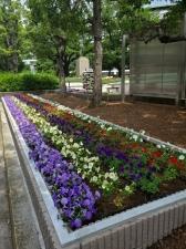 今、区役所花壇が熱い!その2