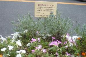 東金町中央自治会のまち花壇その1